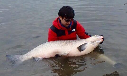 幻の巨大魚「アオウオ」を求めて...