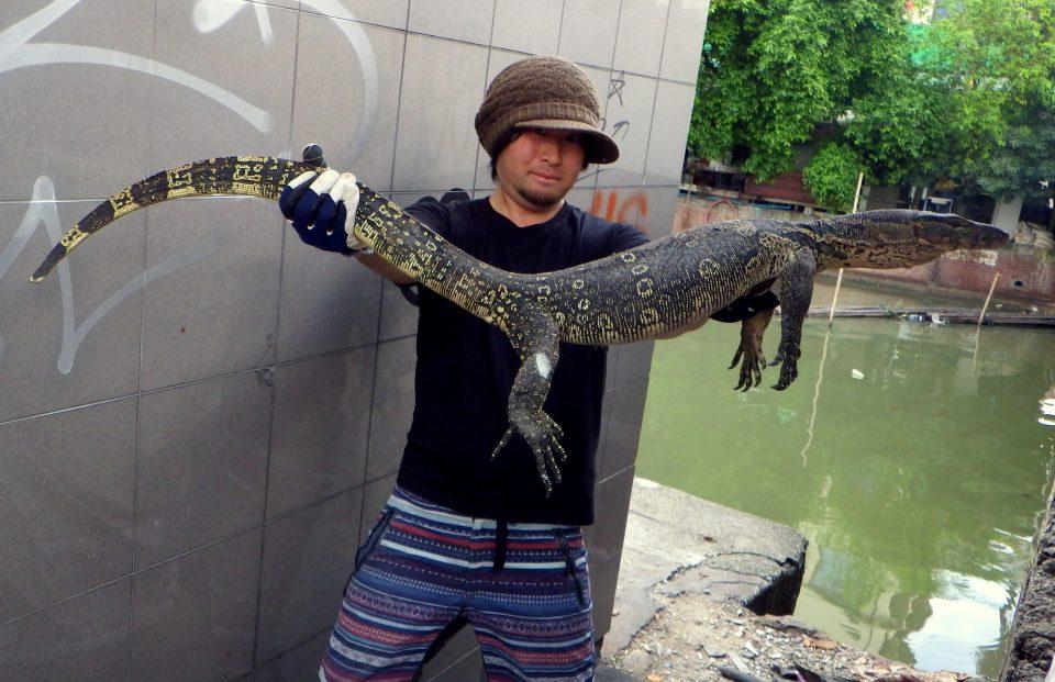 バンコク市内の水路で捕獲された個体